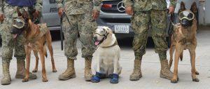 Frida la perra rescatista en Mexico por Hyenuk Chu