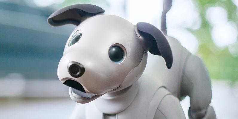 Inteligencia artificial en una mascota.
