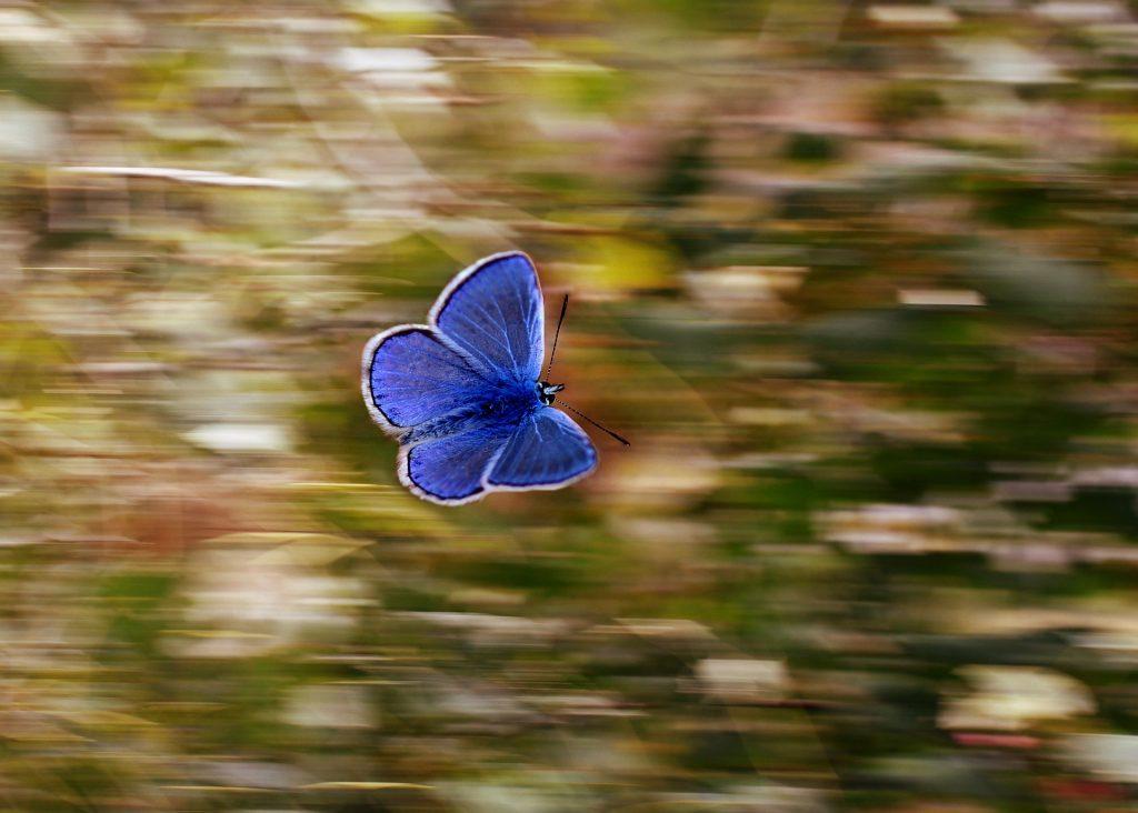 Para sobrevivir con optimismo sé como la mariposa.