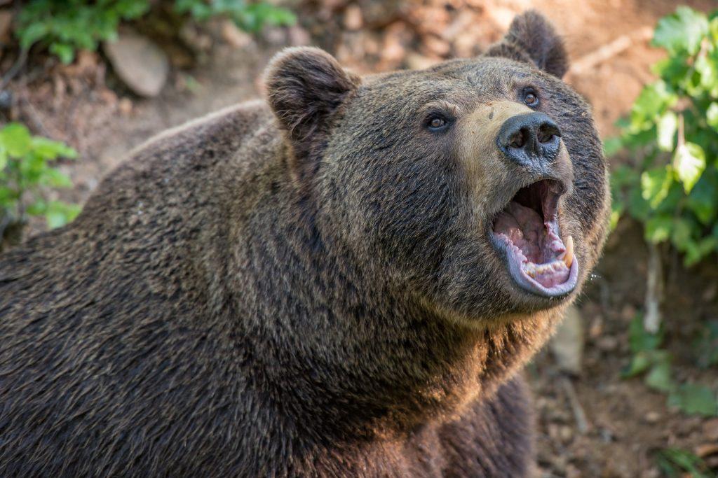 Del buy the dips se puede sacar provecho en el mercado bear.