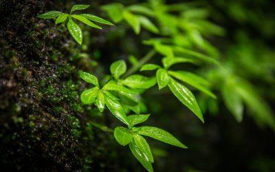Las Buenas Noticias Que Nos Traen Los Green Shoots – Hyenuk Chu