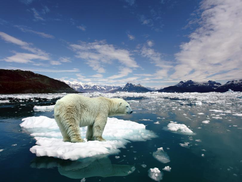Empresas Sostenibles En La Bolsa De Valores Que Salvaguardan El Planeta – Hyenuk Chu