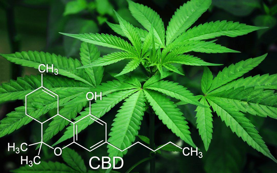 Acciones De Marihuana O Cannabis Stocks: ¿En El Cielo O El Infierno? – Hyenuk Chu