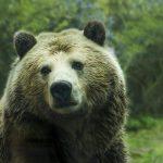 Dow Jones En Picada: ¿Se Acerca El Mercado Bear? – Hyenuk Chu