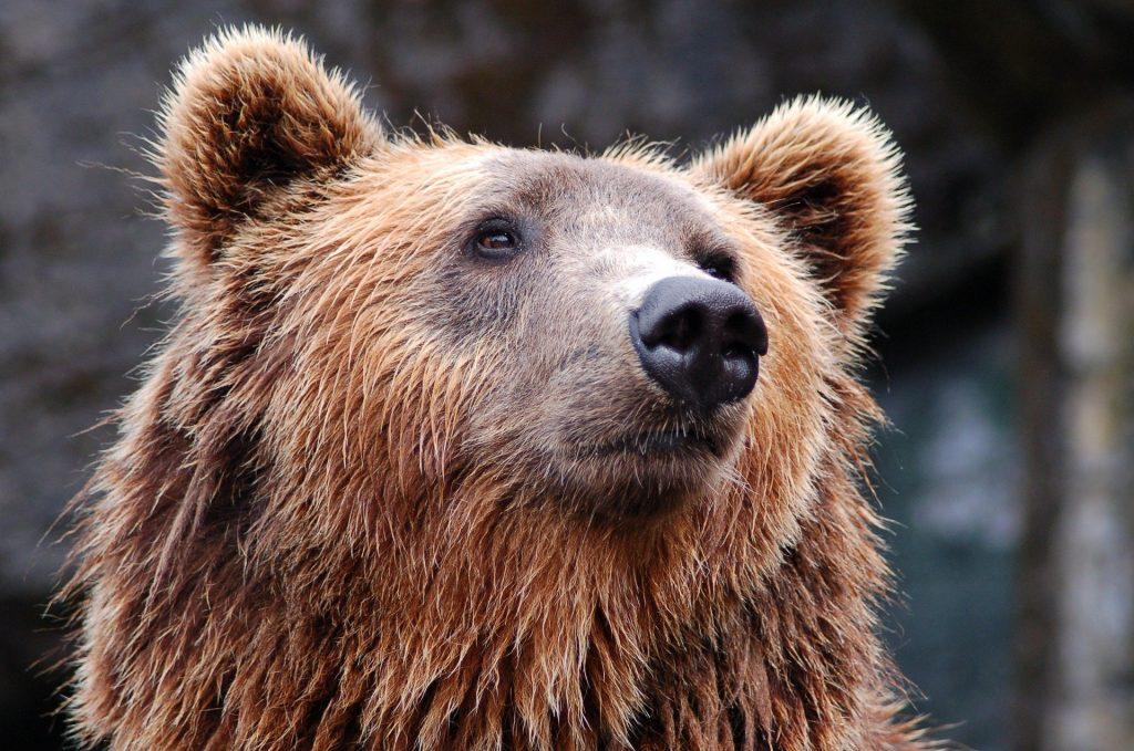 ¿Se podrá ganar dinero este 2020 con mercado BEAR? - Hyenuk Chu