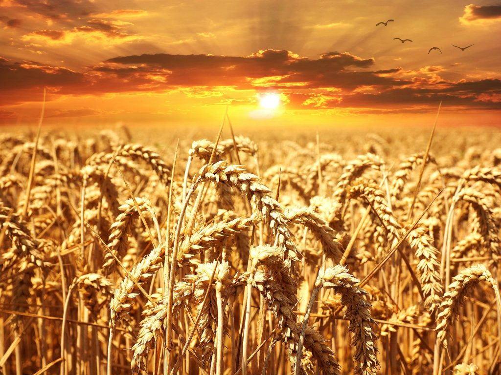 Como el trigo, el agua comienza a negociarse en Wall Street – Hyenuk Chu Foto: Pixabay