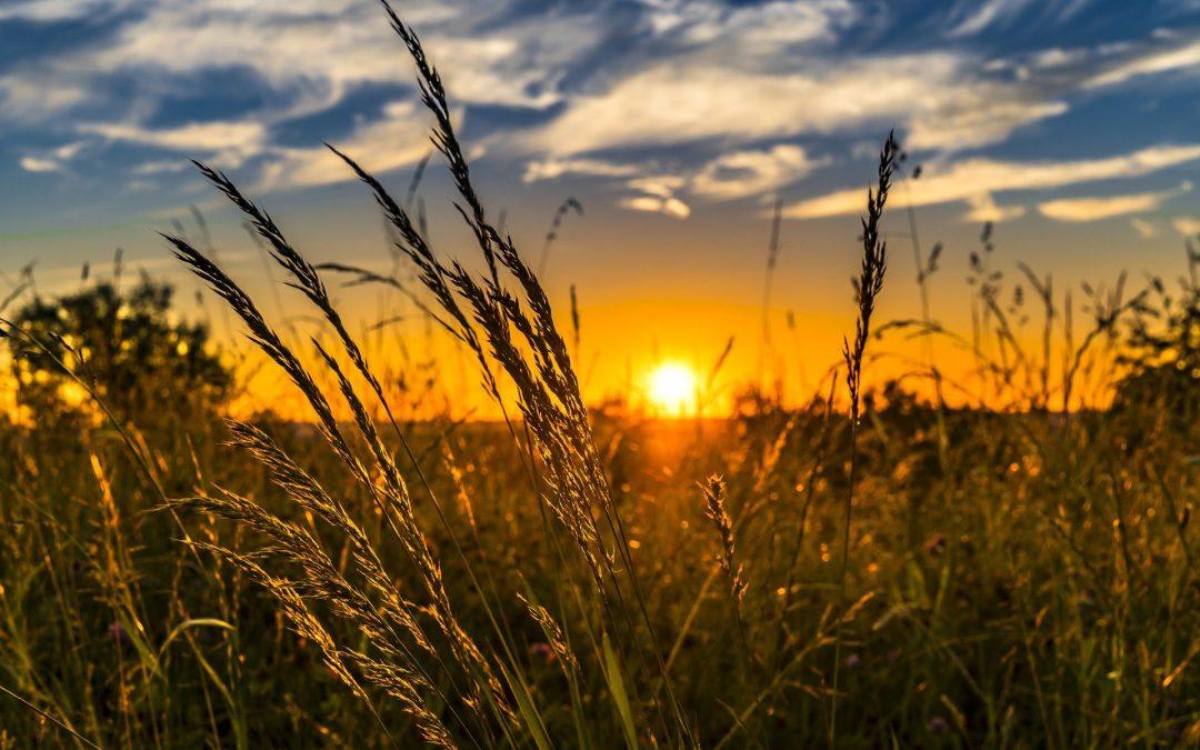 Cómo Invertir En El Sector Agrícola